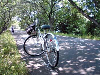080530自転車.jpg